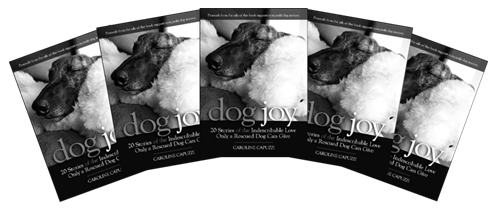 Dog-Joy-five-pack