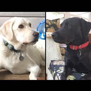 dog-joy-pearl-mattie-2