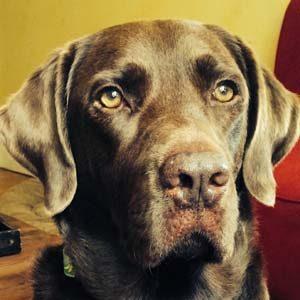 dog-joy-simba